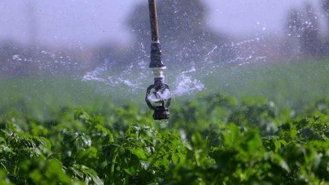 Sprinkler in the field- close up