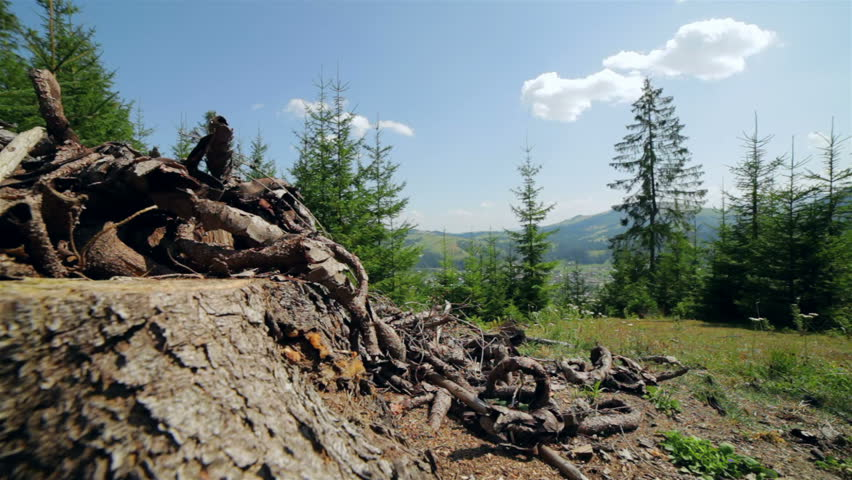 DOLLY MOTION: Mountain landscape near the old stump