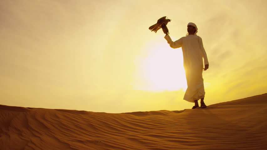 Arabic male white headdress desert sand sunset with trained Peregrine falcon on gloved wrist shot on RED EPIC, 4K, UHD, Ultra HD resolution