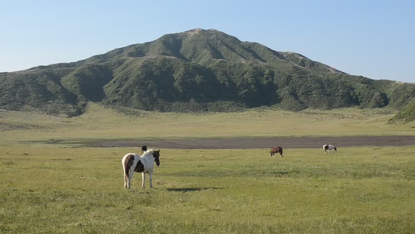 Horses on green field in front of mountain - HD stock footage clip