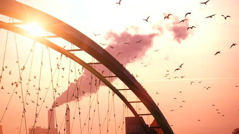 group of birds flying away. sunset dusk sun flare. bridge smoke smog pollution. slow motion