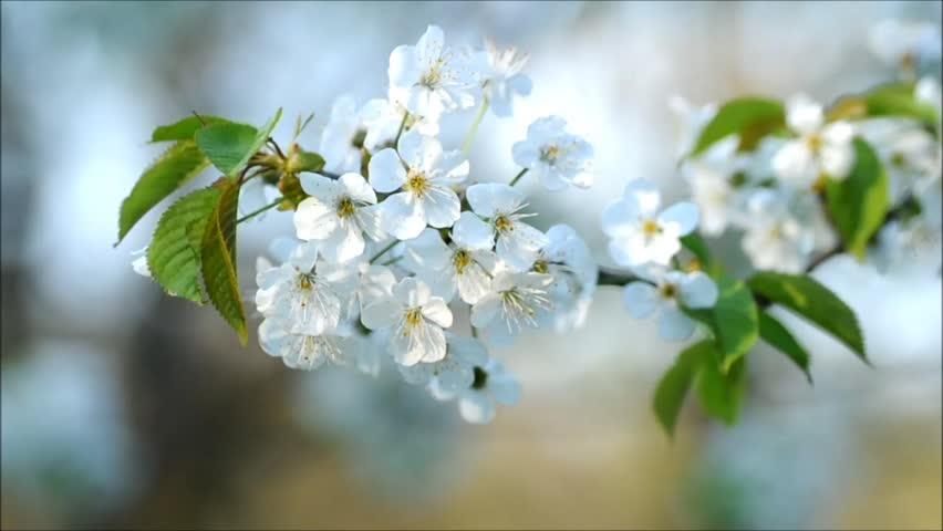 Spring flowers on wind