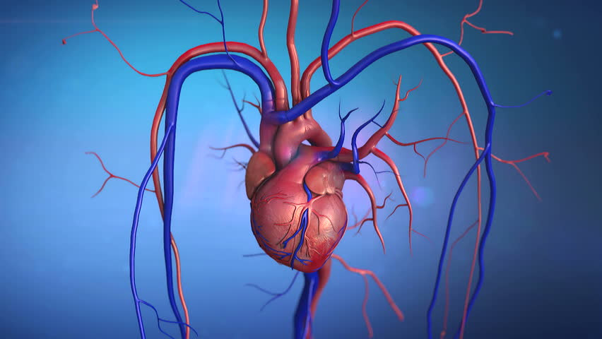 human heart stock footage video | shutterstock, Human Body