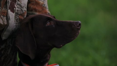 Hunter with German Shorthaired Pointer on the hunting