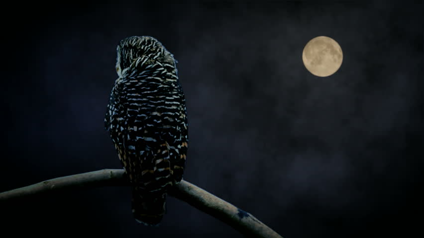 Owl watching in moon light Wise looking owl turning head and watching you. While clouds pass the full moon. Full High Definition com-posit of filmed owl and filmed full moon.