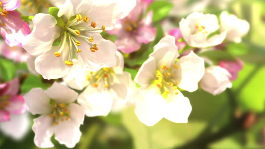 Soon the spring, beautiful 3d animation. see also the new version with butterflies ClipID 9191579