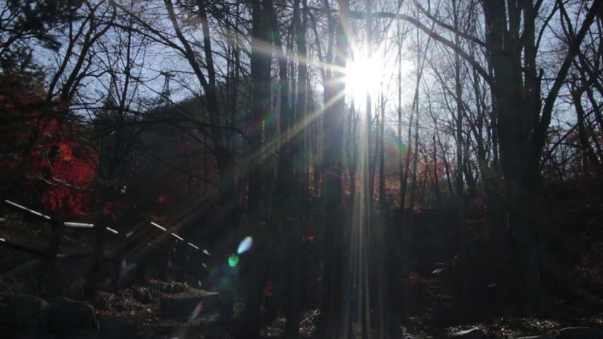 Seoul, South Korea - November, 2012 - timelapse of sun moving slowly behind the trees in Namsan.