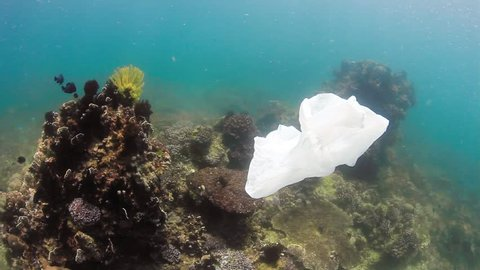 Environmental Problem - A plastic bag drifts across a damaged tropical coral reef.  Human impact, global warming and pollution are rapidly damaging the world's coral reef