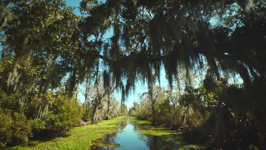 NEW ORLEANS - MARCH 10: 4 different Bayou swamp shots of the surroundings taken from a boat with a tree covering the way and leaves above the camera. | Shutterstock HD Video #5869781
