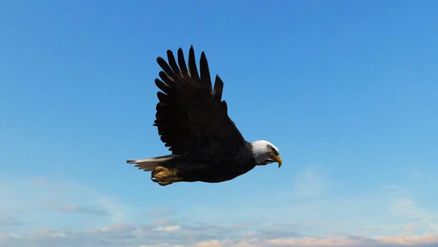 Bald Eagle Flight Close-Up tracking shot #5993264
