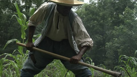 VIRGINIA - 2011.  Re-enactment, recreation of young African-American black man Slave circa 17th and 18th century southern United States.  Slavery reenactment of work on farm or tobacco plantation.