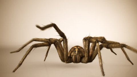 Front view of big venomous spider crawling across bright surface.