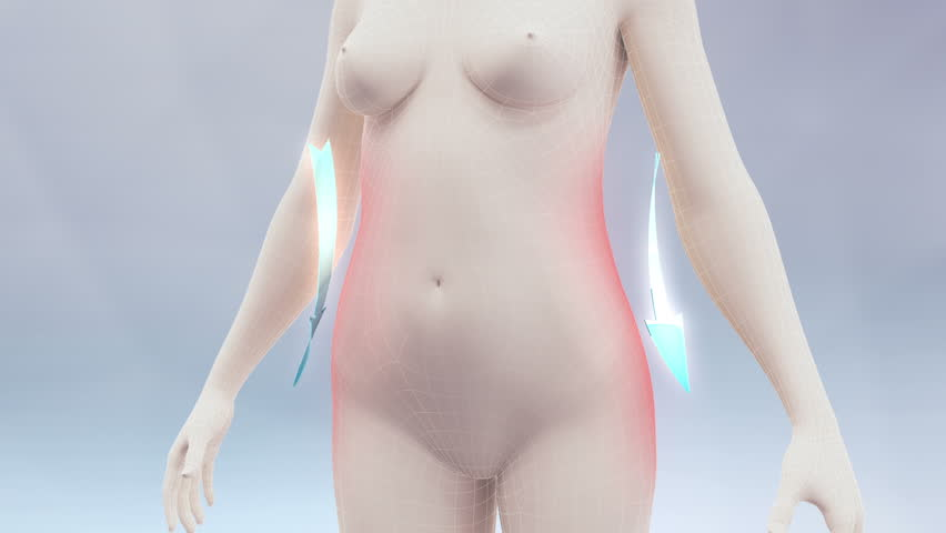 Slim body animation. Three high quality animation showing the process of weight loss and vanishing of body fat. Best for you commercial movie, video presentation and other production.