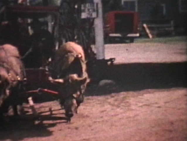 A crazy taxi uses huge pigs to pull people around in this small town in the country in 1964.