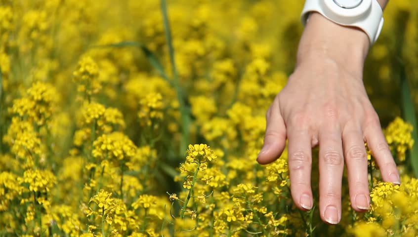 Close-up of woman's hand running through yellow flowers field | Shutterstock HD Video #6373334