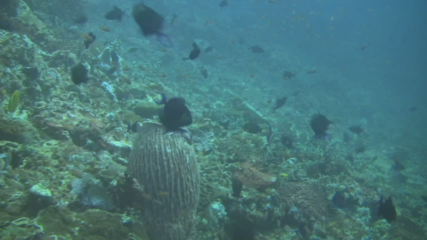 wall diving at verde island in philippines #667354