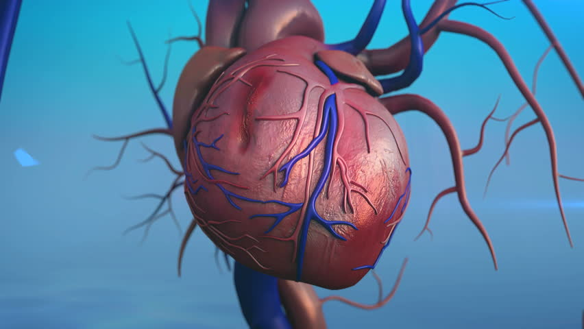 Stock Video Of Human Heart Model Full Clipping Path 6678494