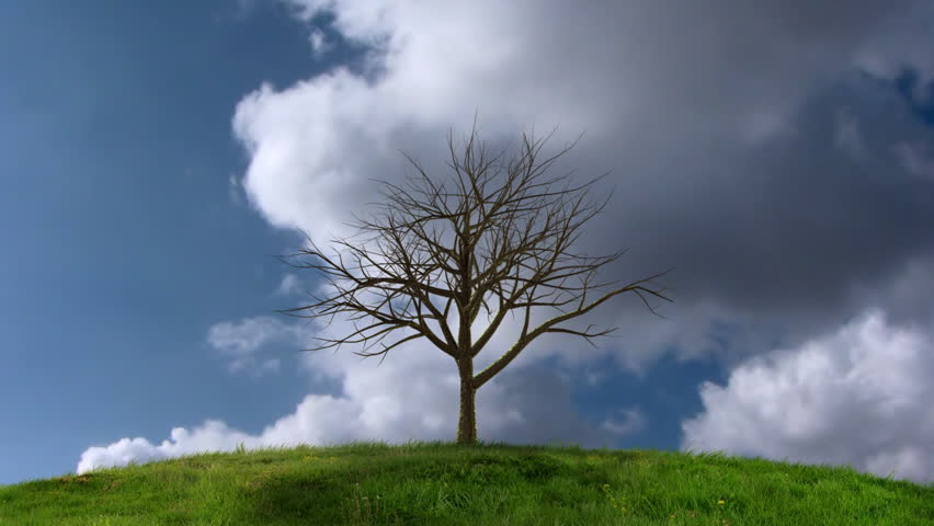HD Animation of a growing tree in front of timelapsing clouds