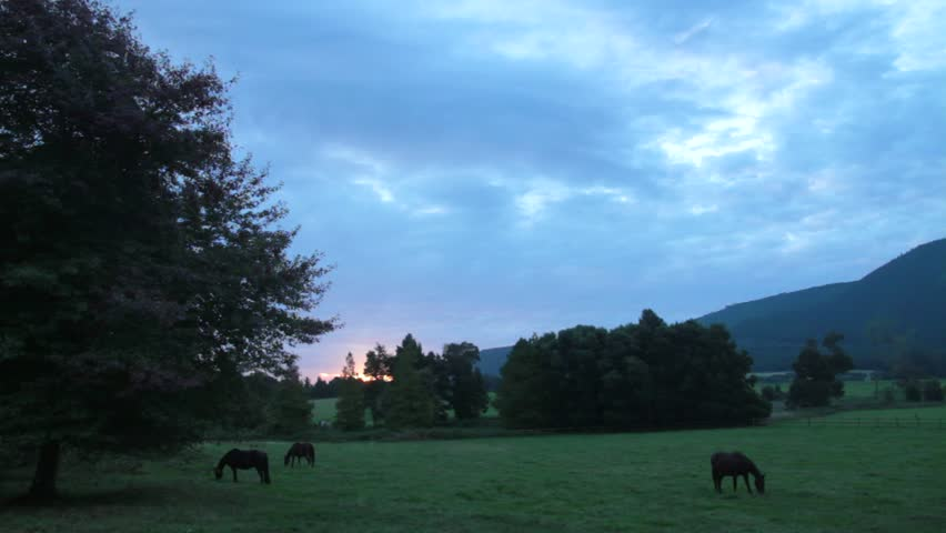 Horses grazing in paddock at dusk