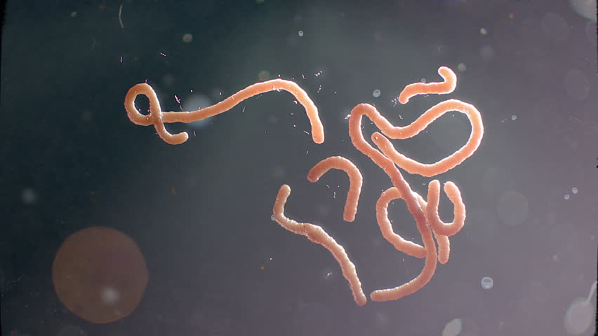 Ebola virus moving like orange-skin colored | Shutterstock HD Video #7020799