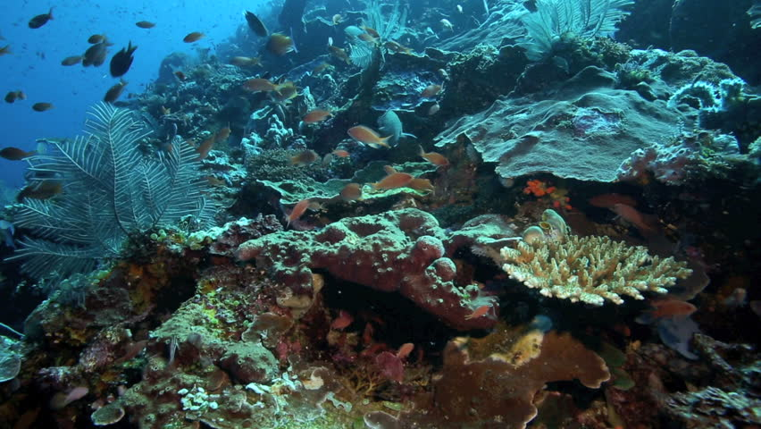 Tasselled Wobbegong Shark Eucrossorhinus Dasypogon Is A
