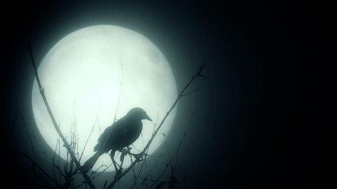 Raven illuminated by a full moon