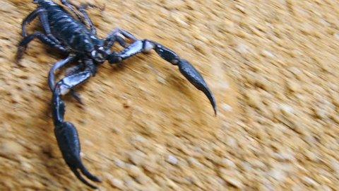 Scorpion running on ground