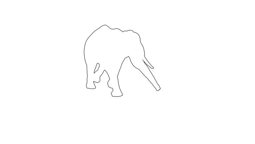 African Elephant moving. On white  screen HD 2d line  animation made in iclone 5 | Shutterstock HD Video #7284094