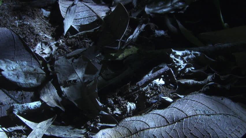 Close up of the dark rainforest floor #7289794