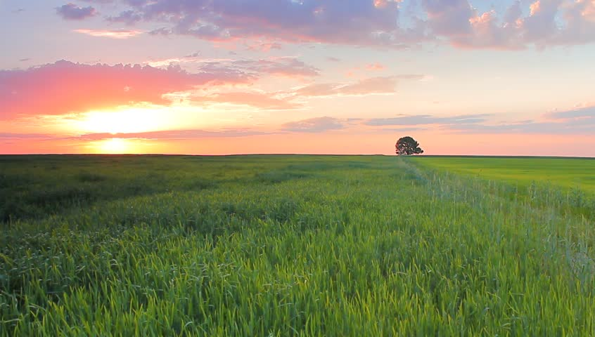 grass field sunrise. Delighful Sunrise Stock Video Of The Wheat Cereal Grass Field With  7406584 Shutterstock For Grass Field Sunrise C