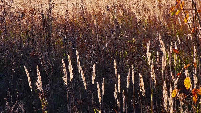 Autumn landscape, field grass backlit by setting sun | Shutterstock HD Video #7426354