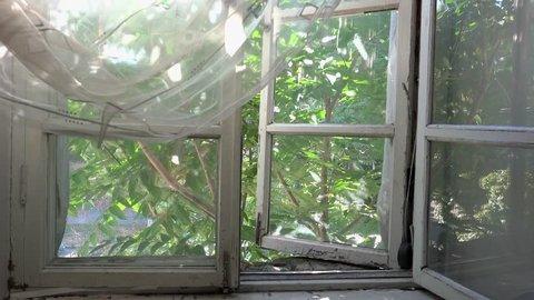 Window to street with tree