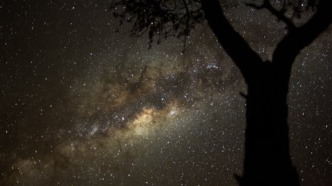 A static holy grail day to night transition timelapse at sunset, framed with an acacia tree in the foreground while the focus pull to the night sky stars with lots of meteorites  and the Milky Way. 4K