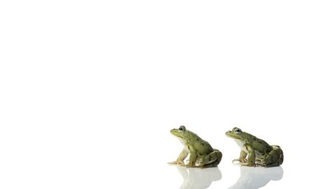 Frogs jumping over each other