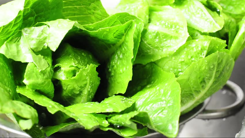 Fresh green romaine lettuce in a metal colander close up