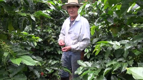BOGOTA, COLOMBIA – FEBRUARY 17 2014: Colombian Coffee Farmer on February 17 2014 in Bogota, Colombia