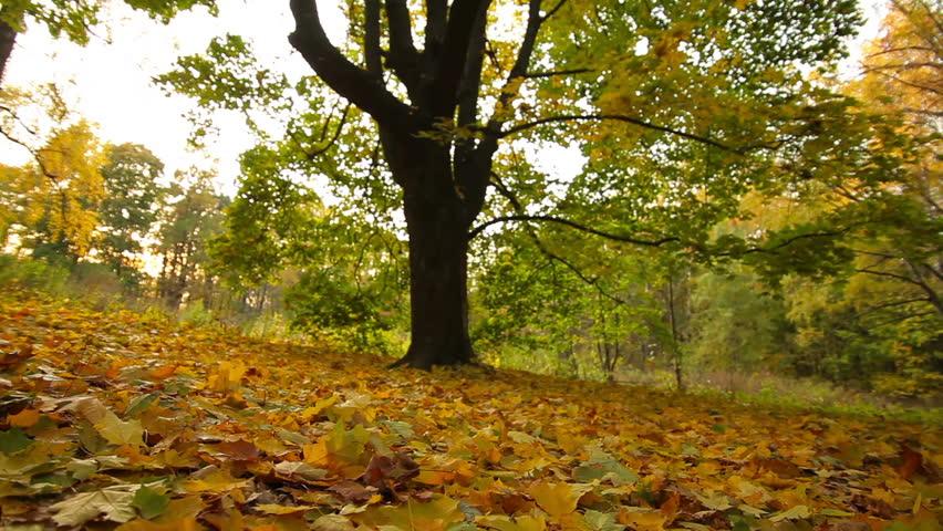 Path In Beautiful Autumn Park, St. Petersburg, Russia. Stock Photo ...
