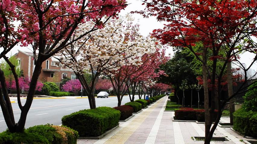 Imagini pentru cherry trees china