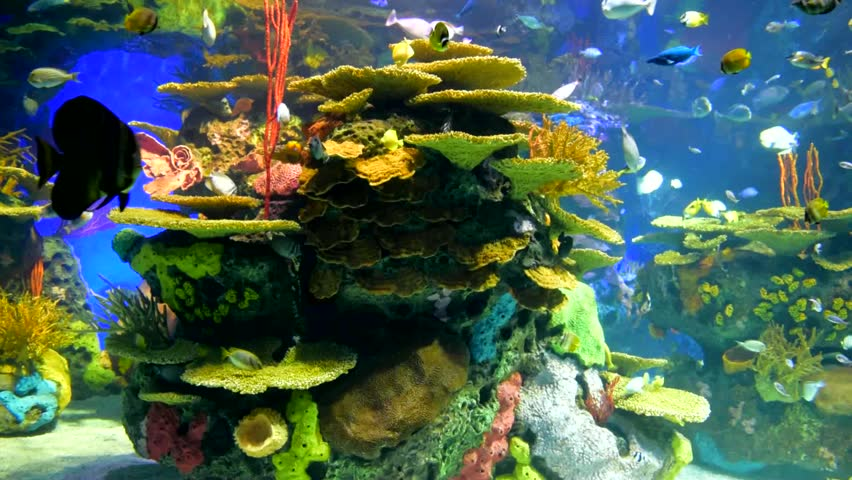 Reef with different fish