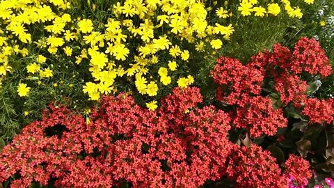 Variety Of Flowers Stock Footage