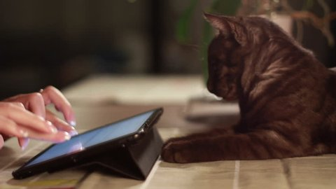 Tablet tracking shot at home with a cat. Find similar in our portfolio.