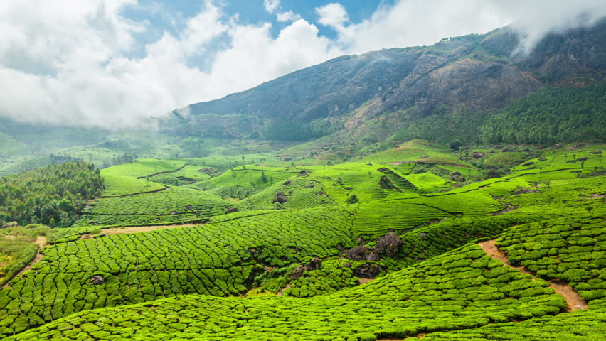 Image result for munnar hd images