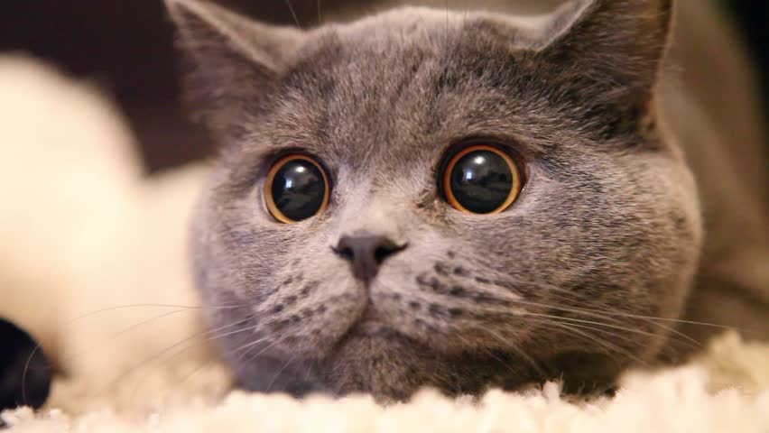Cat with big eyes #8191870