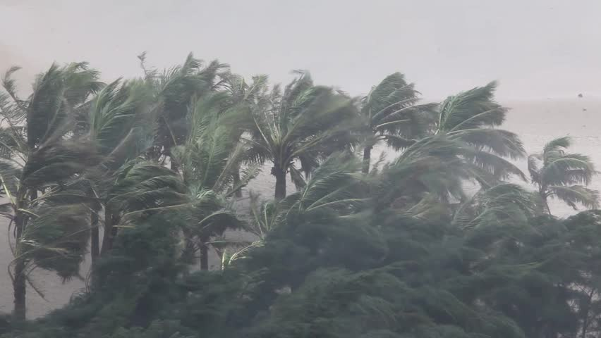 Extreme Hurricane Winds Lash Palm Trees. Footage from eyewall of hurricane as it made landfall with violent wind and flooding rain. Shot in full HD on Canon 5D Mark II 1920x1080 30p - Utor | Shutterstock HD Video #8197315