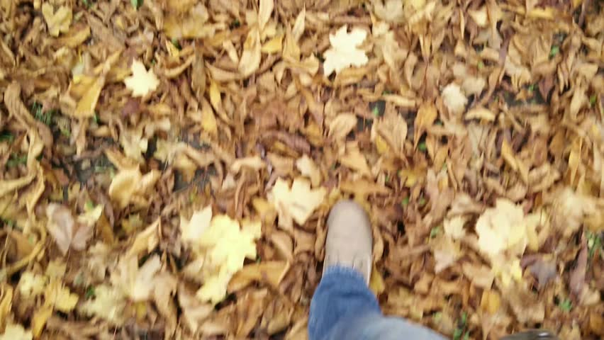 4K Walking In An Autumn Forest Covered With Lush Leaf Foliage Perspective  High Angle View 4K 3840x2610 Ultra High Definition Stock Footage Video  8213734 | ...