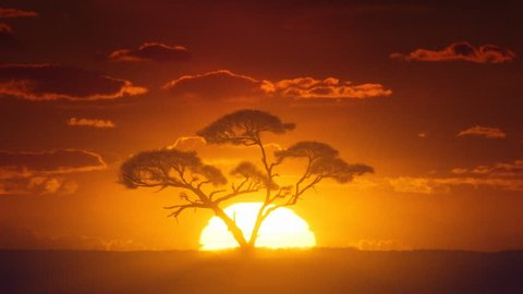 African sunrise timelapse. Acacia tree in the foreground.