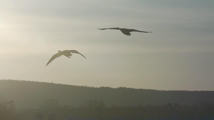 birds at hornborgasjö sweden