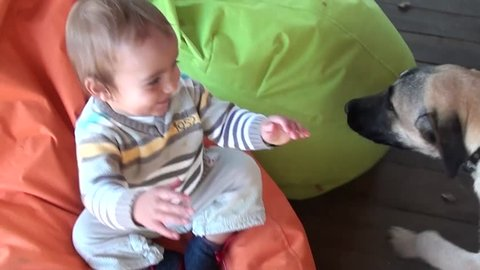 Two huge dogs attack licking a happy child