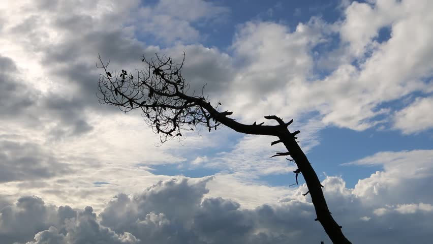 A silhouette of a leafless pine tree on the dramatic background of a blue sky with clouds