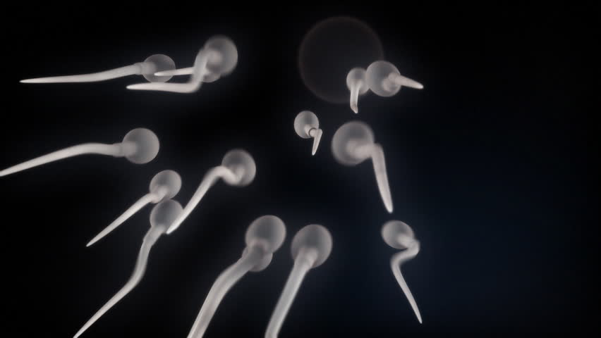 sperm cells swimming to the egg, the sperm cells surround it and one of them makes it in.